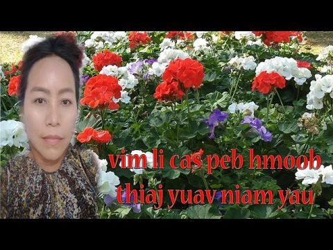 vim li cas peb hmoob thiaj yuav niam yau 6/3/2020