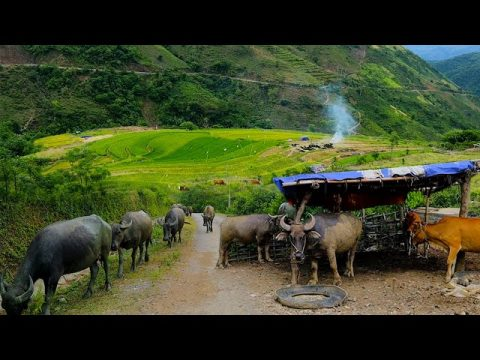 TRAVEL HMONG VILLAGES IN NORTH VIETNAM #102, 7/2020