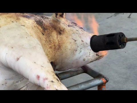 Hmong Wisdom : Hmong Butcher Farm Modern Style ( Hmong / Hmoob / Miao / Butcher Farm )