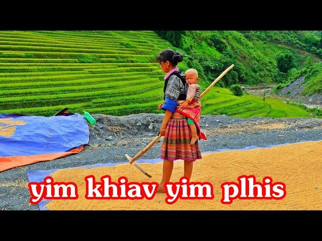 #Hmong Vietnam- ชาวนาม้งเวียดนาม #เพลงม้งเพราะๆ  พัดลมเป่าข้าวลีบออก #MùCangChải  #YênBái